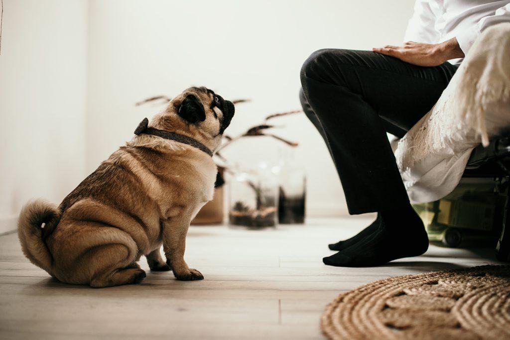 Mariage Ferme Armenon chien des mariés