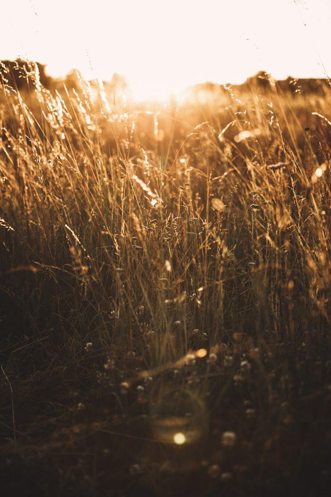 Photographe Mariage Prieuré de Vernelle champs de blé au soleil